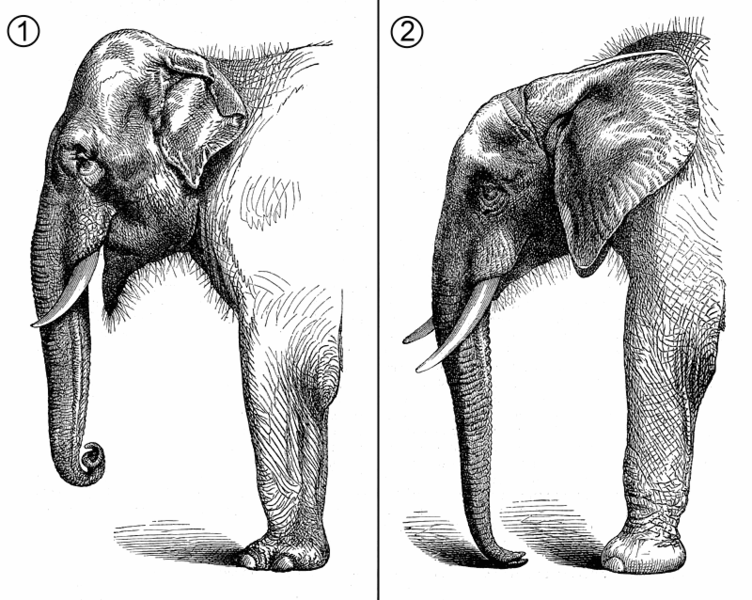 52d74d93195 Science and the Elephant s Child by Bronwyn Mills – Tupelo Quarterly